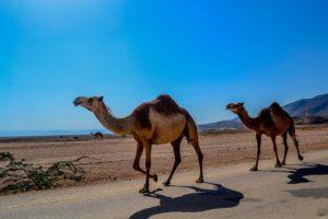 Oman last minute je plný zážitkov